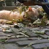 sleeping-cat-amsterdam