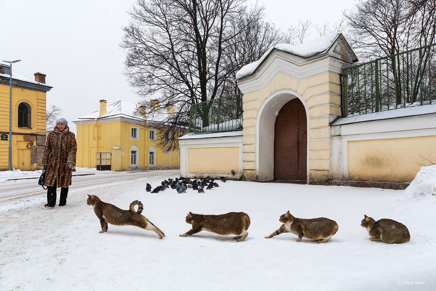 cat-saint-petersburg-winter2