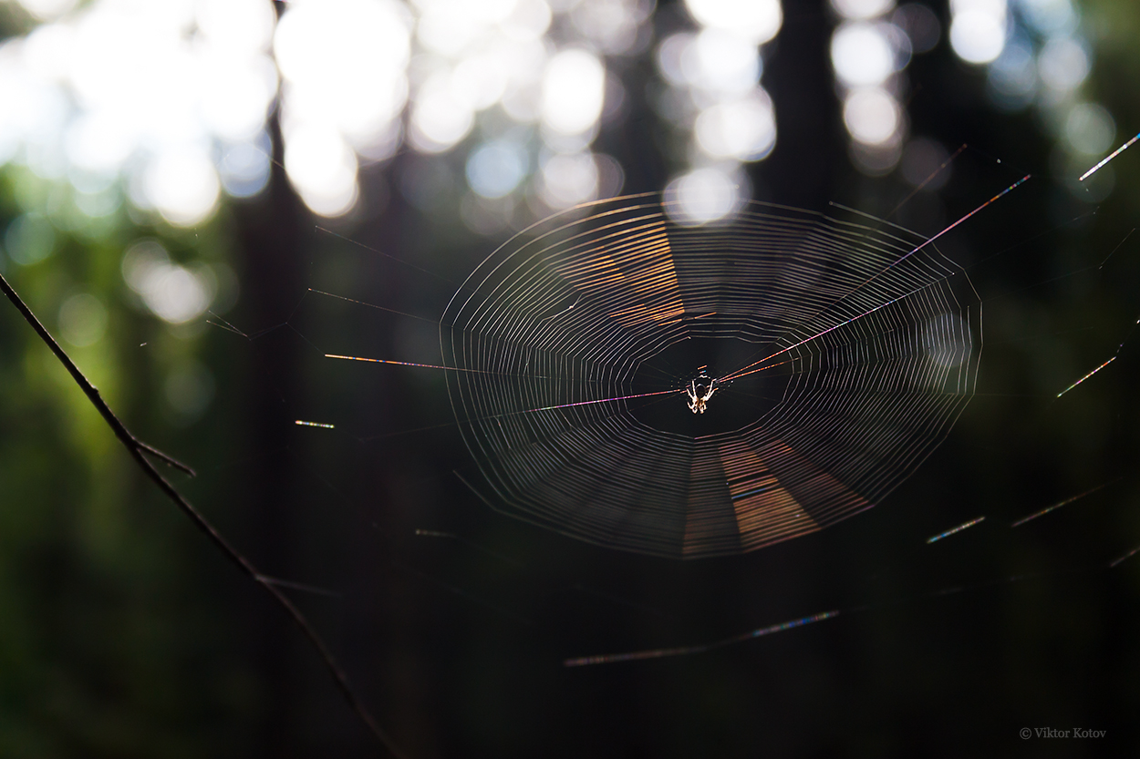 forest-spiderweb-sun2