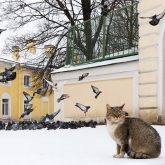 cat-saint-petersburg-winter1