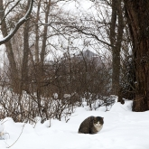 cat-saint-petersburg-winter4