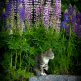 cat_flowers_blumen