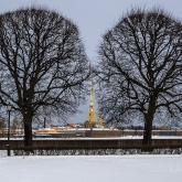 trees-peter-and-paul-fortress