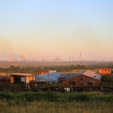 cherepovets-steel-mill-cows2