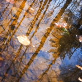 puddle-reflection-spring-forest