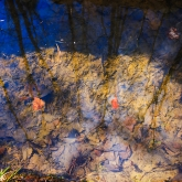 puddle-reflection-spring-forest2