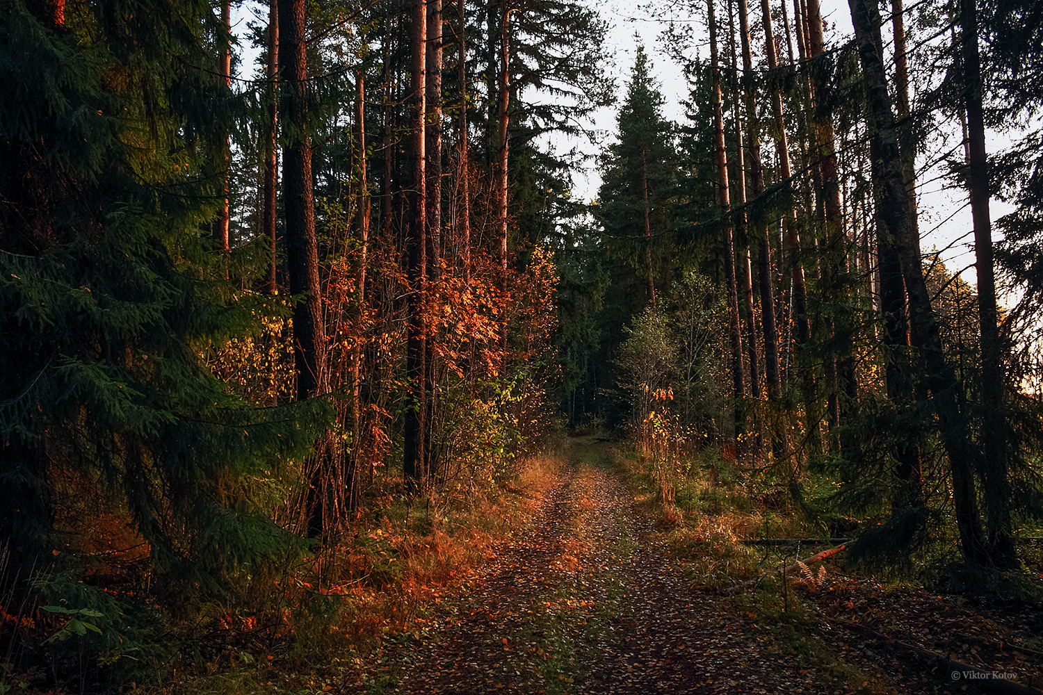 autumn-forest-morning1
