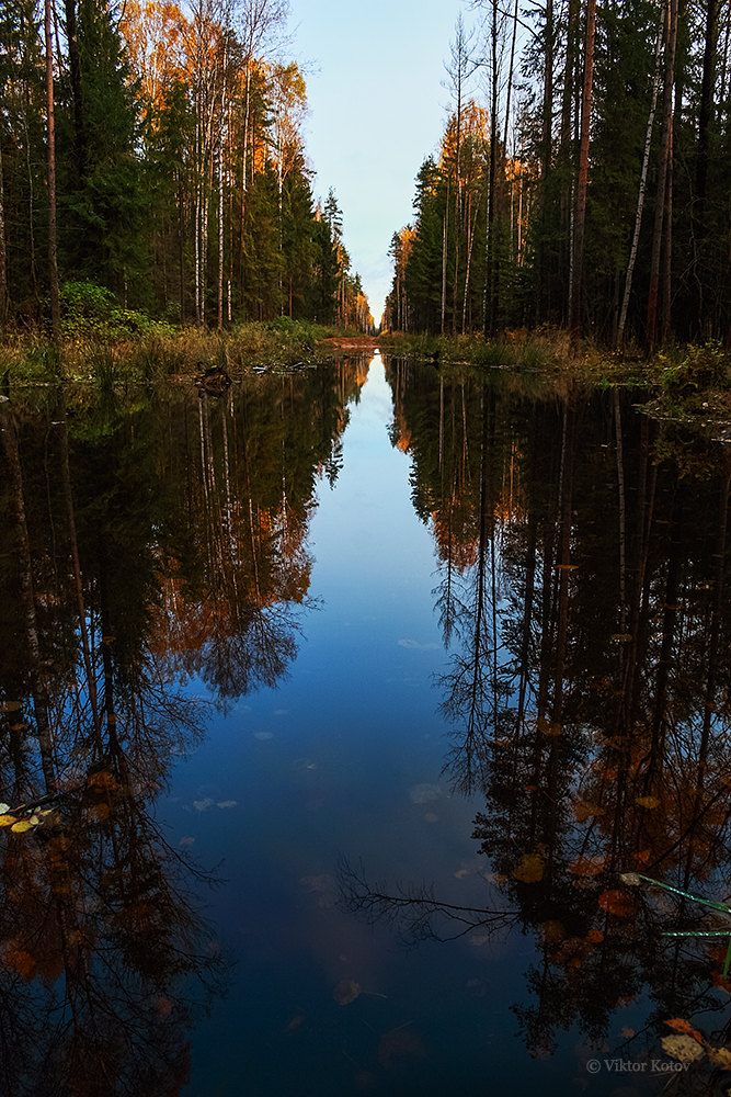forest-road-swamp-reflection2