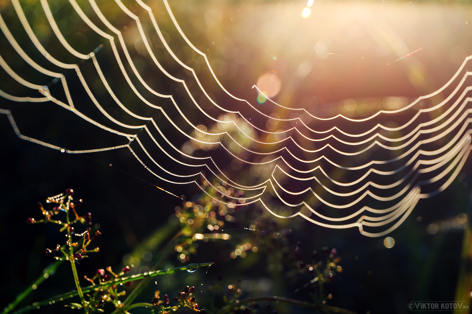 morning-spiderweb-sun