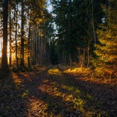 forest-road-autumn-sunlight