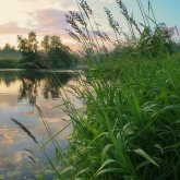 river-evening-grass