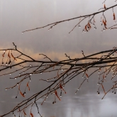 russian-countryside-river-mist-tree-drops1