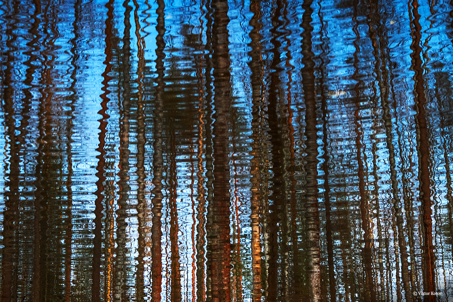 trees-reflection2